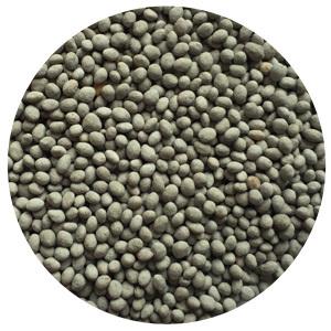 clover legumes