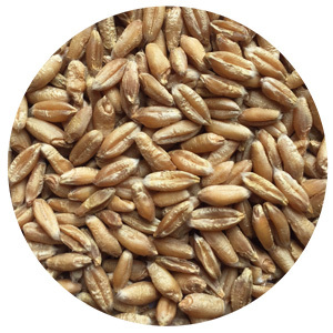 indiana seeds