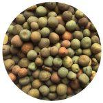 winter pea seeds